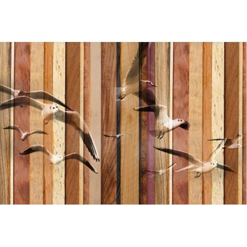Pescăruși in tonuri maro - fototapet animale