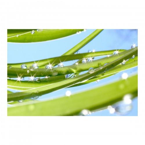 Fototapet verdele proaspăt
