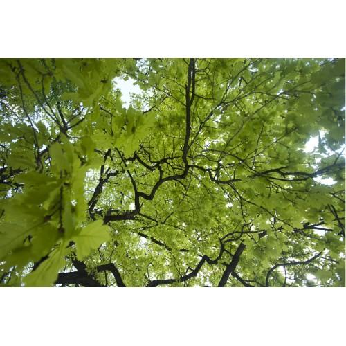In copac - fototapet vlies