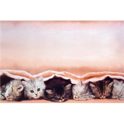Pisicute dulci ca zaharul - fototapet animale