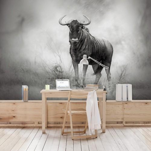 Privirea bestiei - fototapet animale