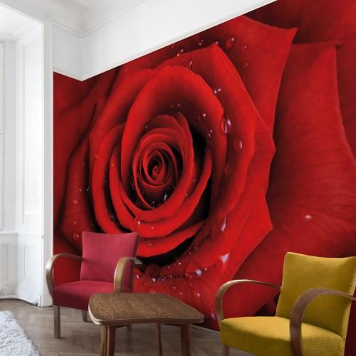 Trandafirul rosu cu picaturi de apa - fototapet vlies