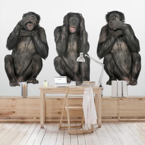 Trei maimute intelepte - fototapet animale