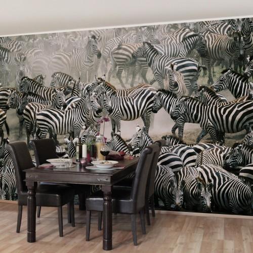 Turma de zebre - fototapet animale