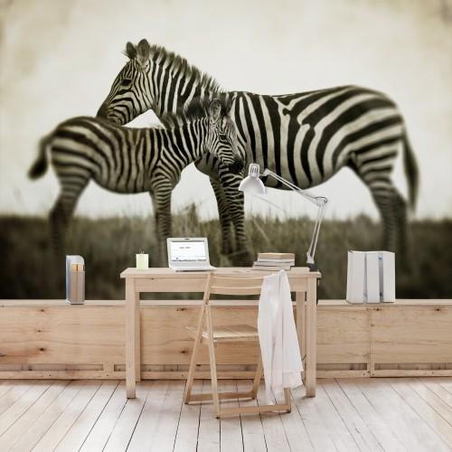 Zebra femela si manzul - fototapet animale
