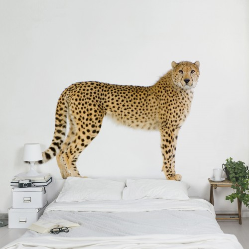 Ghepard - fototapet animale