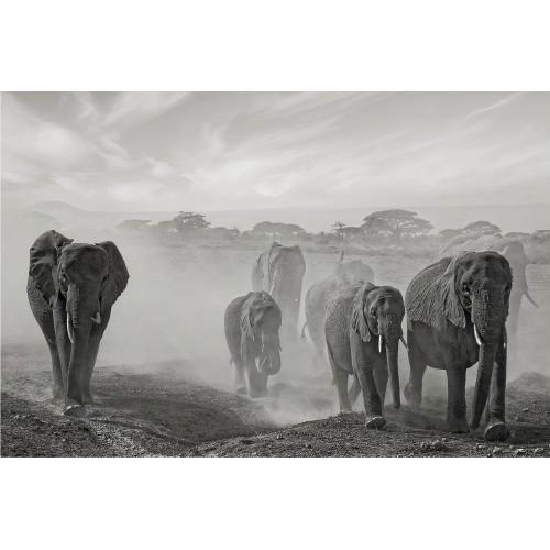 O turmă de elefanți - fototapet animale