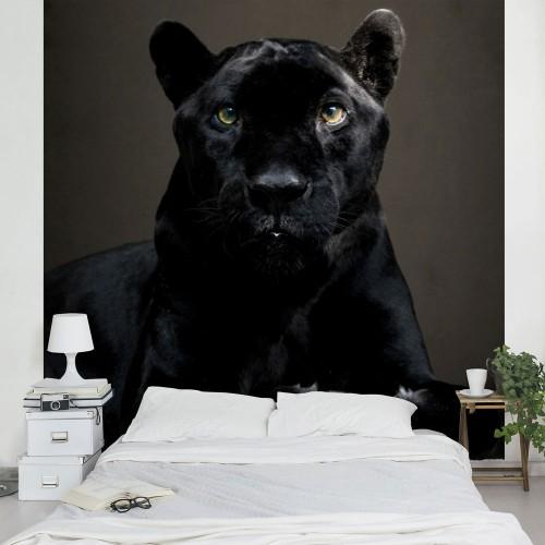 Panteră neagră - fototapet animale