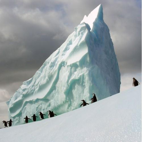 Pinguinii din Antarctica - fototapet animale