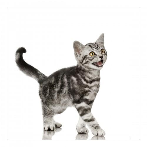 Pisicuța - fototapet animale