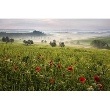 Primavară în Toscana - fototapet vlies