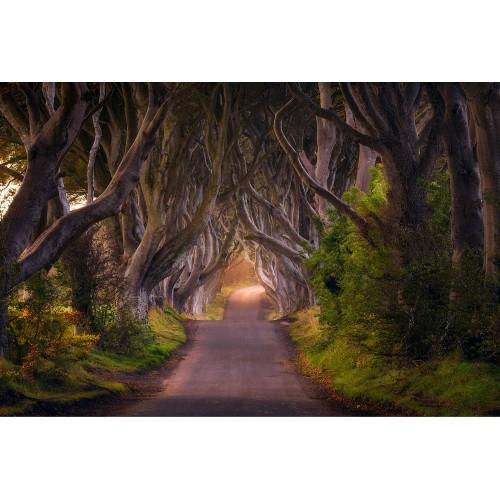 Tunelul copacilor - fototapet vlies